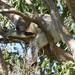 girls do it too by koalagardens