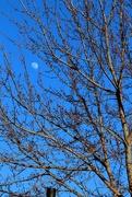 18th Feb 2016 - Moon