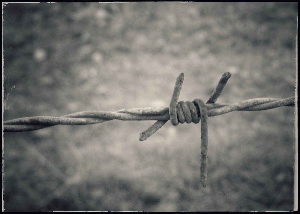 Barbed by salza