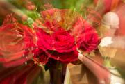 15th Feb 2016 - Rose Blur