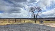 16th Feb 2016 - Tree Over Iron Plow Vineyards