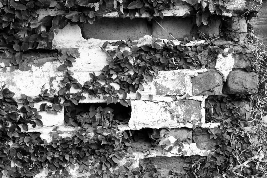 2016 02 13 B&W Crumbling Bricks by kwiksilver