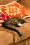 21st Feb 2016 - Cat Nap