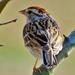 Here Birdie Birdie by milaniet