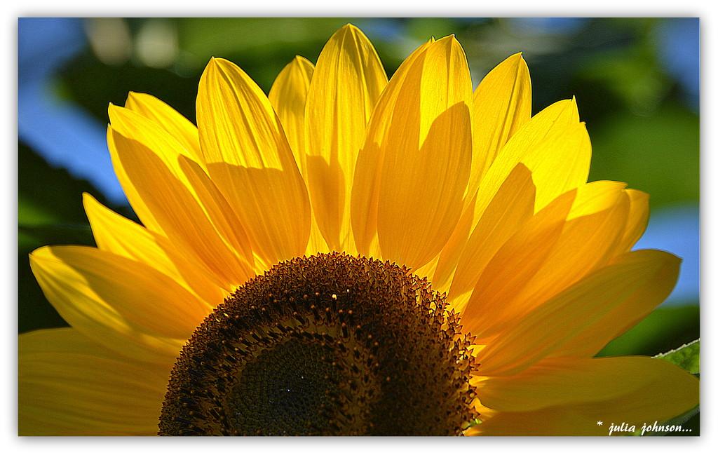 'You are My Sunshine'... by julzmaioro