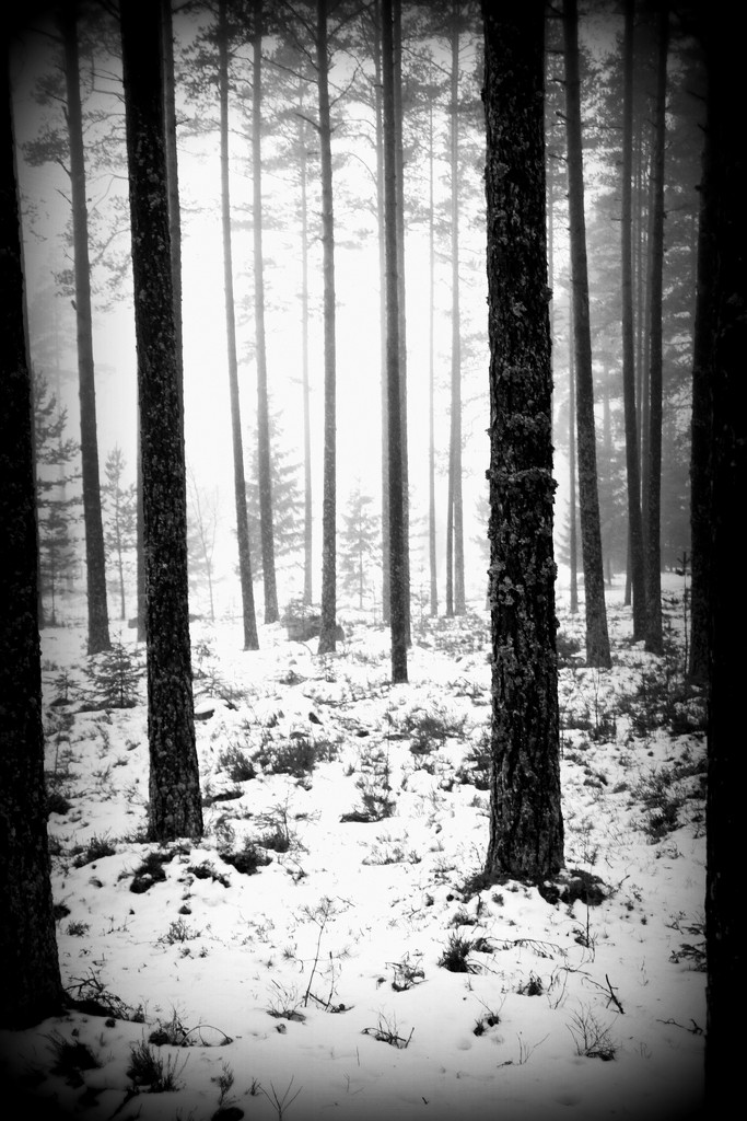 Grimness of the trees by susale