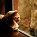 Lion in a Window  by mzzhope