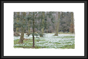 26th Feb 2016 - Hadsock Wood Snowdrops