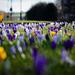 Spring is Springing by gailmmeek