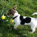 Yogi Smelling The Daffodil by snoopybooboo