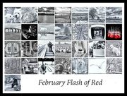 29th Feb 2016 -  2016 02 29 - February Flash of Red
