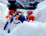 1st Dec 2010 - Club Penguin Snow Party