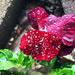 Nourishing Rain by dsp2