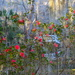 Azaleas and bridge, Magnolia Gardens, Charleston, SC by congaree