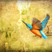 2016 03 05 Kingfisher Flying by pamknowler