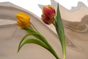 4th Mar 2016 - Tulips Foiled  © Gill Haynes
