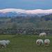 Pennines by shirleybankfarm