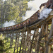 Puffing Billy  by maree_sanderson