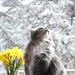 Spring? What spring?  by vera365