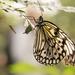 Follow your dreams on Butterfly Wings by bizziebeeme