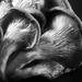 Mushroom Study by pflaume