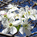 Now It's Truly Springtime by milaniet