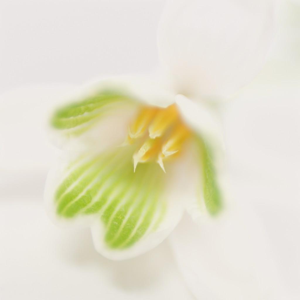 Floret by pistache