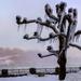 Ice Tree and Its Friend, Rainbow by taffy