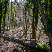 7th Mar 2016 - Tiddesley Wood  © Gill Haynes