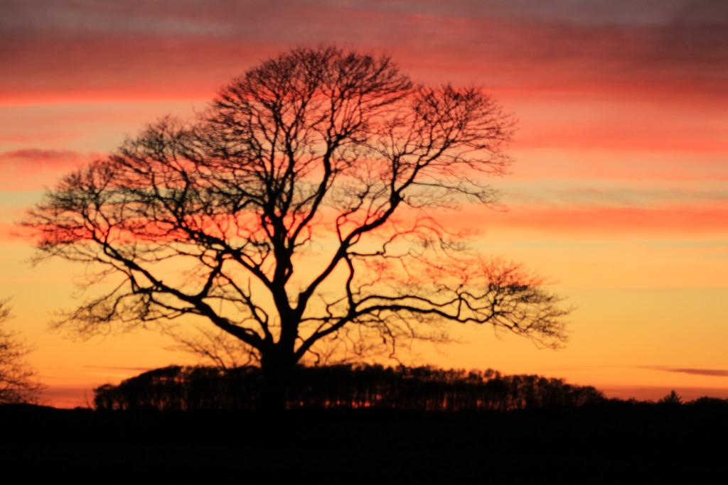 sunset by callymazoo