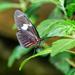 Butterfly in the Garden by lynne5477
