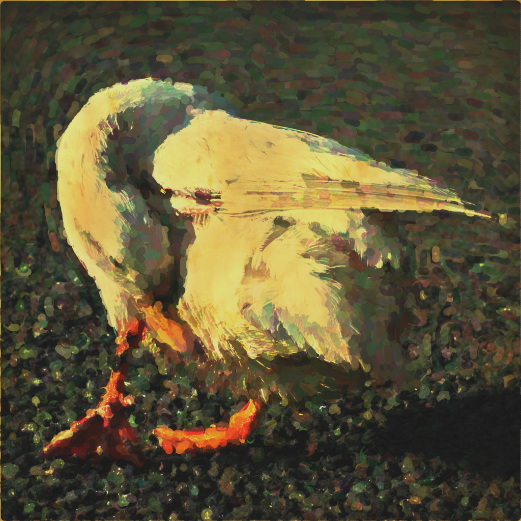 Portrait of a duck by overalvandaan