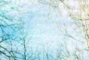 11th Mar 2016 - Blue Skies