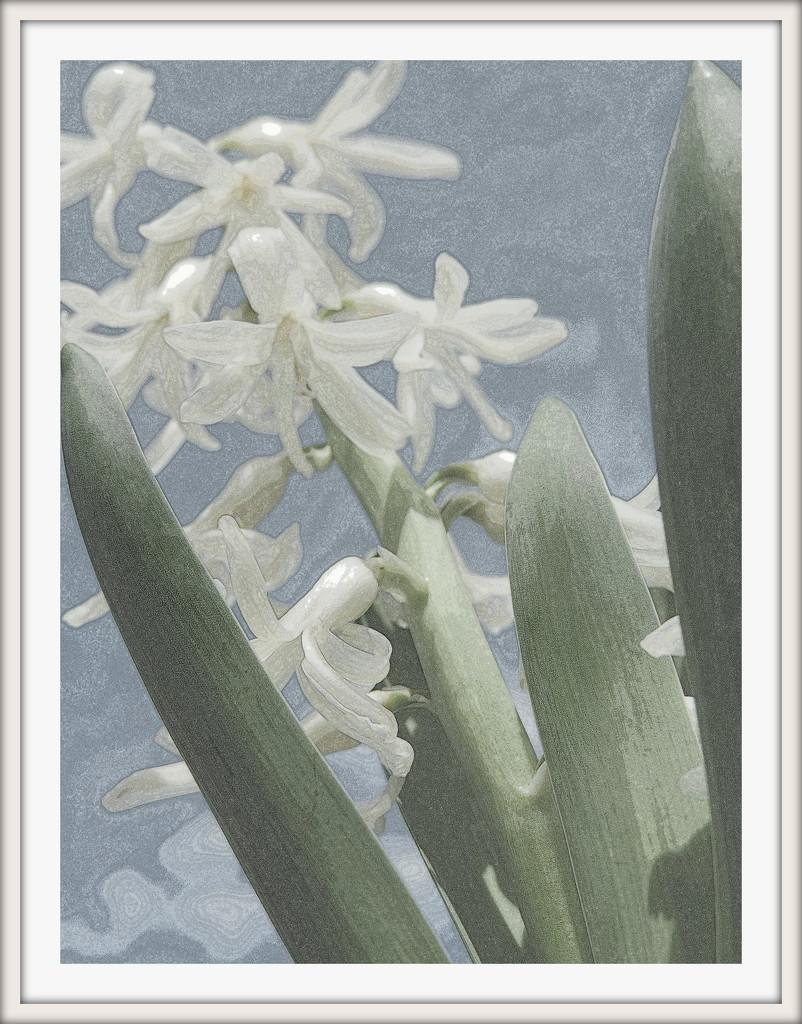 Hyacinth watercolor by homeschoolmom