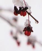 2nd Dec 2010 - Snowy day.