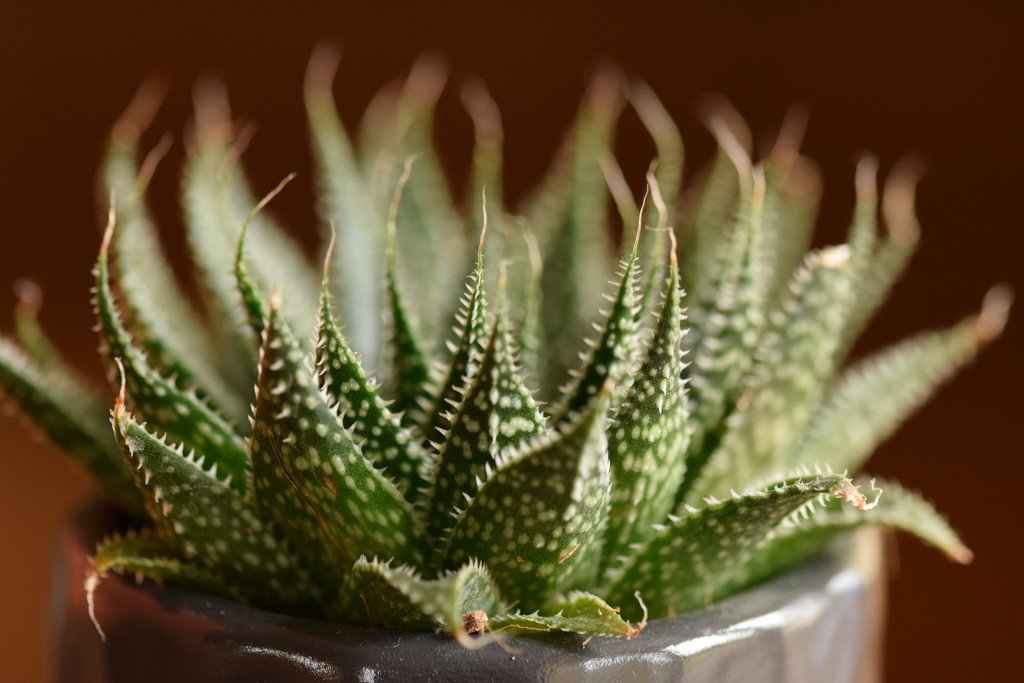 succulent by christophercox