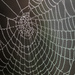 Spider Web by rjb71
