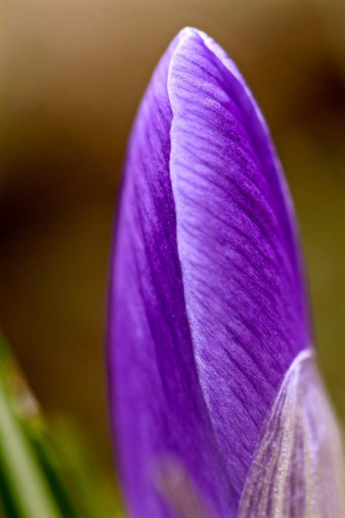 Purple Prayer by mzzhope