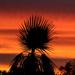 Sunset glory by flyrobin