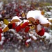 Berries in the snow - 2 by geertje