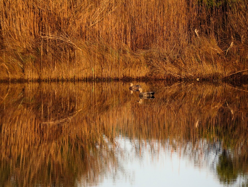 Golden Pond by dmariewms