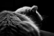 16th Mar 2016 - Fur