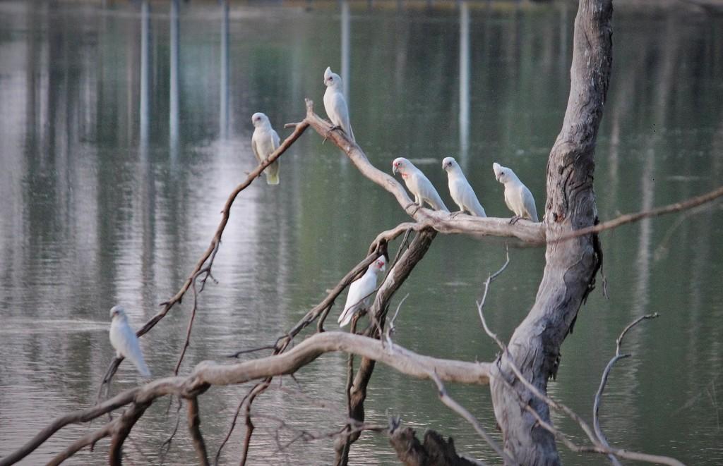 """""""Birds in a Tree""""... by tellefella"""
