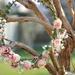 Thursday's Floral Art Class by jamibann