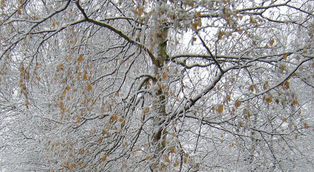Snow by pyrrhula