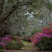 Magnolia Gardens, Charleston, SC by congaree