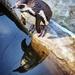 Penguin by swillinbillyflynn