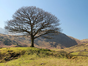 18th Mar 2016 - Guardian of the dale