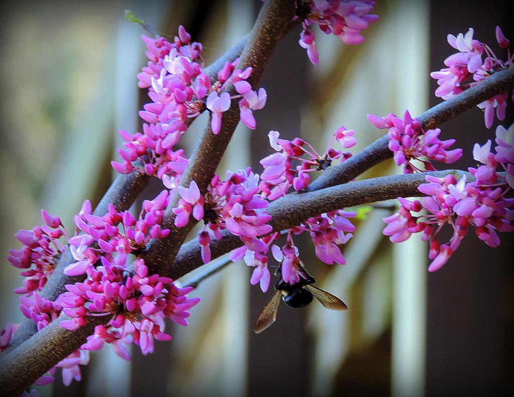 Purple flowers of Spring! by homeschoolmom