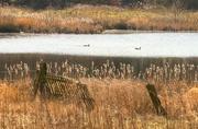 20th Mar 2016 - Peaceful Pond